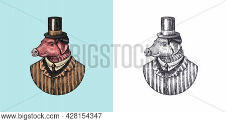 Pig Character. Swine Hairdresser. Fashionable Animal, Vitorian Gentleman In A Jacket. Hand Drawn Eng