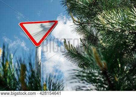 Road Sign Give Way. One Triangular Road Sign Give Way Is Located Among Pine Trees In A Wooded Area O