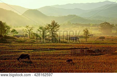 Native Style Farm And Mountain View In Northern Thailand