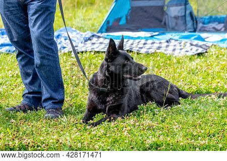 A Purebred Black Dog Lies On The Grass Next To Its Owner. Man Resting With A Dog In The Park