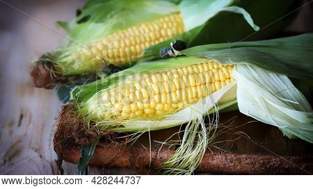 Raw Corn On A Wooden Surface. Harvest Of Corn.