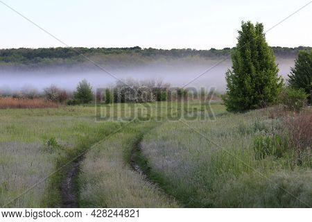 rut road across meadow in morning steppe. Mist over land. Take it in Ukraine