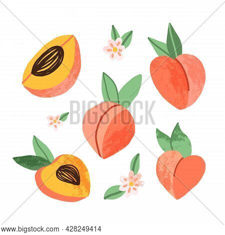 Hand-drawn Peach Set In Various Dimensions, Full Fruit And Pieces, And Peach Tree Bloomy Flowers. Ca