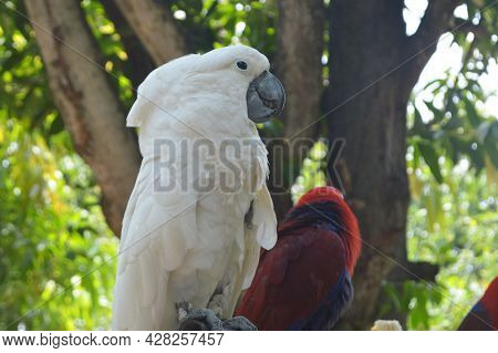 White Parrot Perched Under The Tree Photo