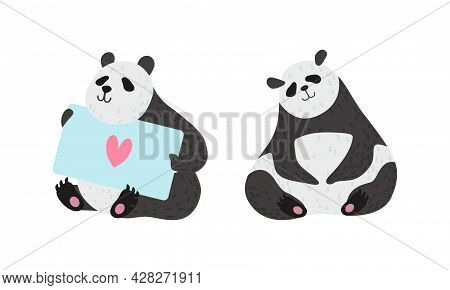 Panda Bear With Black-and-white Coat And Rotund Body Sitting And Holding Card Vector Set