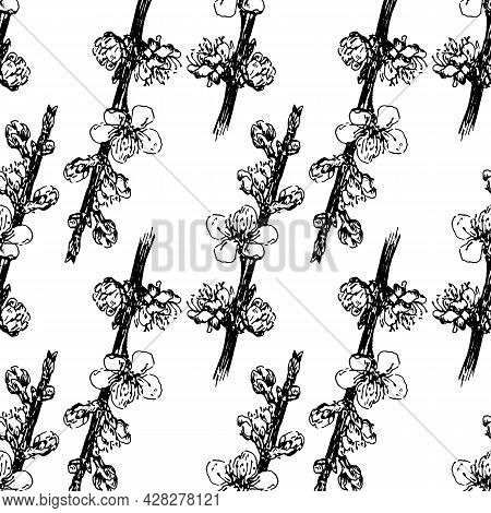 Vector Seamless Pattern Of A Blooming Apricot Branch. Vintage Pattern Of A Small Flowering Tree Bran