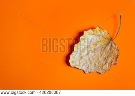 Autumnal Leaf On The Orange Paper Background Closeup