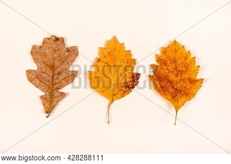 Autumnal Leaves On The Paper Background Closeup