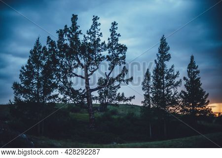 Dramatic Scenery With Few Beautiful Trees On Hill On Background Of Dark Blue Cloudy Sky. Scenic Natu