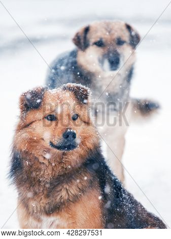 Two Dogs In The Winter In The Snow During A Snowfall. Animals In Winter