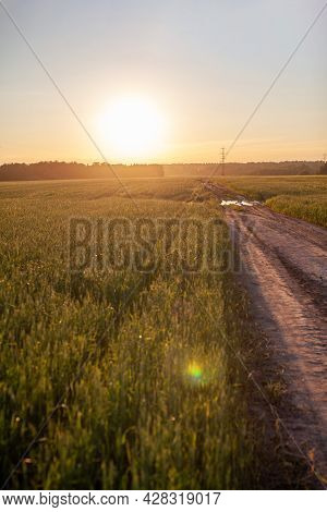 A Road In The Middle Of A Field With Wheat Leads To The Sun. Ears Of Wheat Or Rye Growing In The Fie