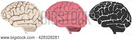 Human Brain, Human Brain Icon Isolated On White Background. Vector, Cartoon Illustration. Vector.