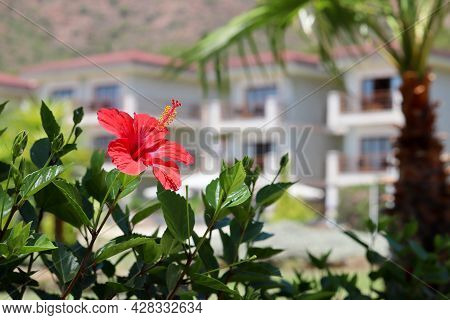 View Through The Hibiscus Flower And Green Leaves To The Villa With Palm Trees. Tropical Vacation, S
