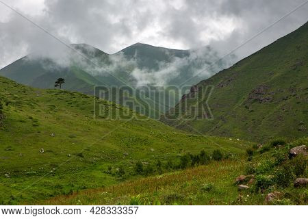 Mountain Landscape On A Cloudy Summer Day. Low Clouds, Green Hills. The European Alps. A Lonely Pine