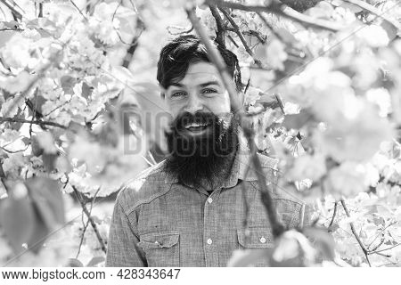 Pink Tender Bloom. Weekend In Garden Concept. Lot Of Flowers Surrounding Guy. Hiding In Bloom. Hands