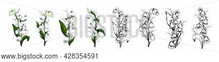 Hand-drawn Set With Lily Of The Valley Flowers, Primroses. Realistic Bouquets Isolated On A White Ba