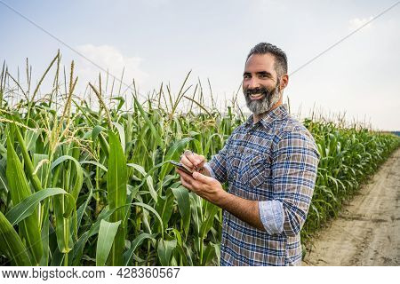 Agronomist Is Standing In His Growing Corn Field. He Is Examining Corn Crops After Successful Sowing