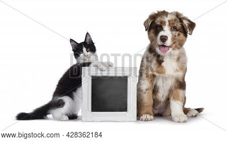 Cute Red Merle White With Tan Australian Shepherd Aka Aussie Dog Pup, Beside Menu With Black And Wit