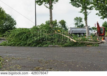 Hurricane Flood And Wind Damage Tornado Storm Felled Trees Flooding Wind Green