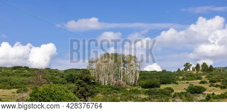 Panoramic view of Aspen grove on rocky mountains in Colorado