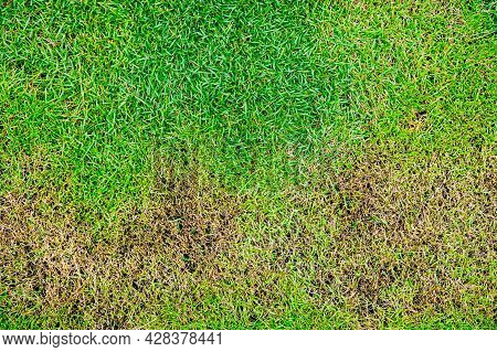 The Texture Of Dead Grass Top View Of Nature Background Texture Green And Yellow Grass Texture The L
