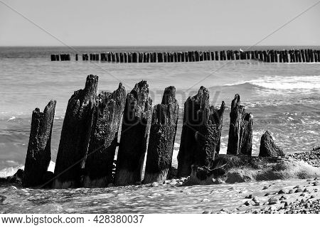 Stone Beach And Wooden Breakwaters On The Baltic Coast In  Poland, Monochrome