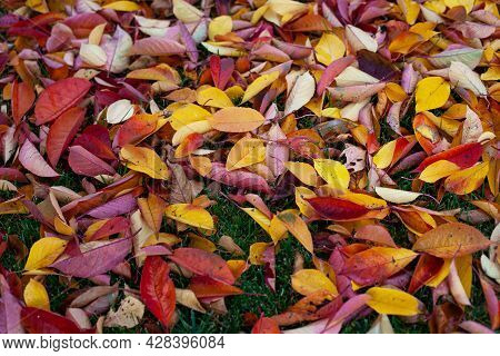 Autumn Background Of Bright Autumn Leaves That Have Fallen To The Ground, A Top View Of Yellow, Red,