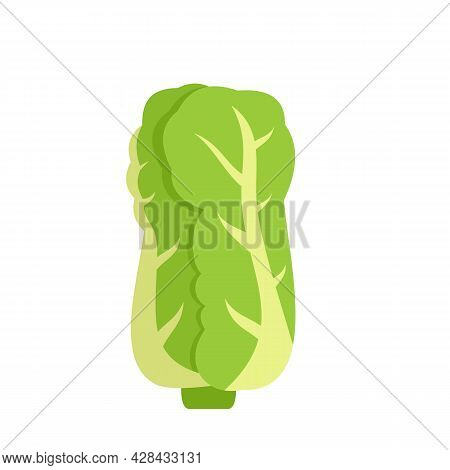 Chinese Cabbage Icon. Flat Illustration Of Chinese Cabbage Vector Icon Isolated On White Background