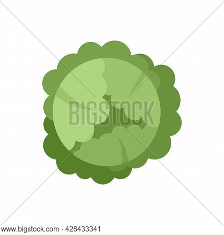 Food Cabbage Icon. Flat Illustration Of Food Cabbage Vector Icon Isolated On White Background