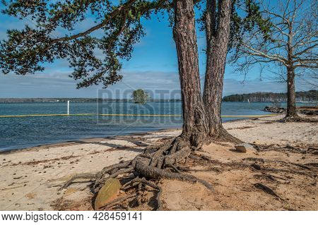Trees With Exposed Roots In The Foreground On The Beach And Swim Area Of The Lake With An Island And
