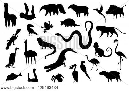 Silhouette animals of south america. Nature fauna collection. Geographical local fauna. Mammals living on continent.  illustration