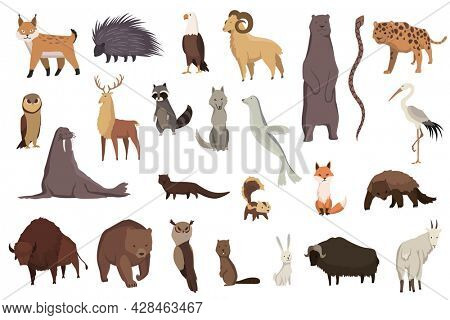 Animals of north america. Nature fauna collection. Geographical local fauna. Mammals living on continent.  illustration in kids style