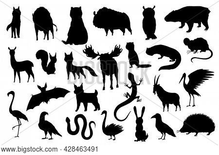 Silhouette animals of europe. Nature fauna collection. Geographical local fauna. Mammals living on continent.  illustration