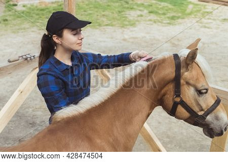 Female Horse Owner Brushing Mane Of Her Light Brown Horse In The Horse Farm. The Horse Bridle Is Tie