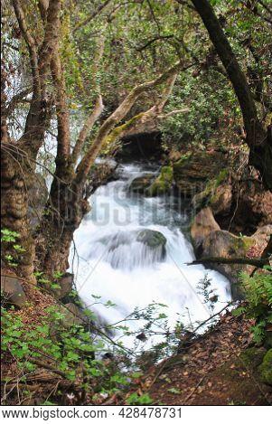 Nahal Hermon Nature Reserve (banyas) - Strong Rushing Water Of The Banyas Stream Flowing Among Moss-