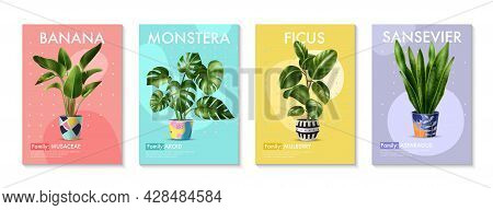 Four Realistic Posters With Tropical Green House Plants Banana Palm Monstera Ficus And Sansevieria I