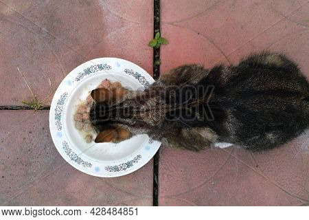 Overhead Shot Of A Skinny Cat Eating Pet Food