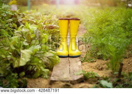 A Closeup Of Yellow Rubber Boots In A Green Beautiful Garden. Gardening Boots On The Wood Plank On T