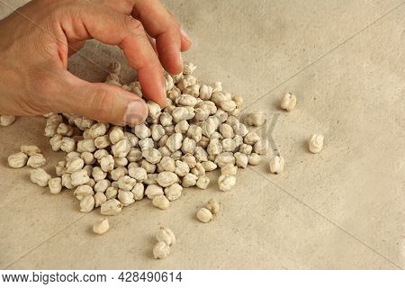 Hand Holds Dried Chickpea Seed To Estimate Or Compare The Size, On Craft Paper, Chickpea Seeds Are H