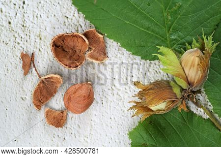 Hazelnuts In Shell And Cracked With Hazel Leaves On A Light Gray Rustic Background, High Angle View