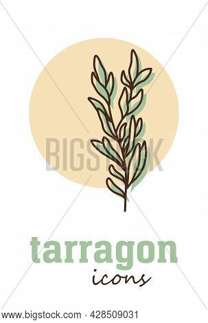 Tarragon Vector Icon. Vegetable Green Leaves. Greenery. Culinary Herb Spice For Cooking, Medical, Ga