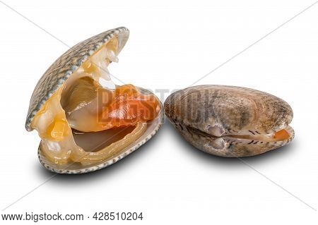 View Of Opened And Closed Clams, Baby Clams, Short Neck Clams, Carpet Clams Isolated On White Backgr