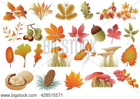 Autumn Leaves And Plants Isolated Set. Fallen Leaves Of Different Colors, Acorn, Chestnuts, Walnuts,