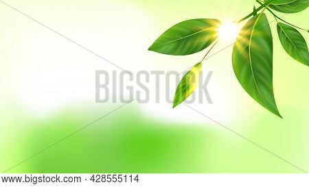 Tree Branch Green Leaves And Sun Copy Space Vector. Fresh Natural Plant Leaves And Rays. Nature Bota
