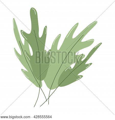 Green Fresh Crispy Arugula Leaves. Organic Healthy Food From Local Farm. Hand Drawn Vector Illustati