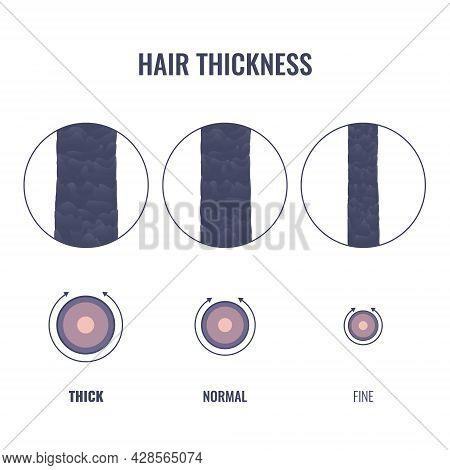 Hair Thickness Types Chart Of Thin, Medium, Coarse Strand Width