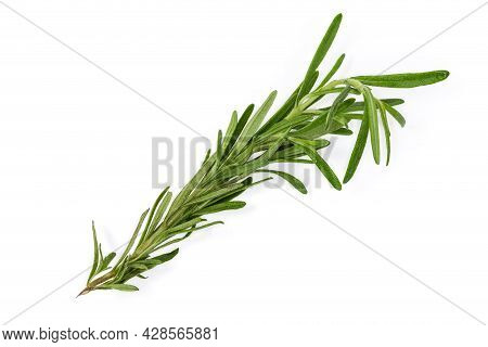 Single Twig Of The Fresh Rosemary On A White Background