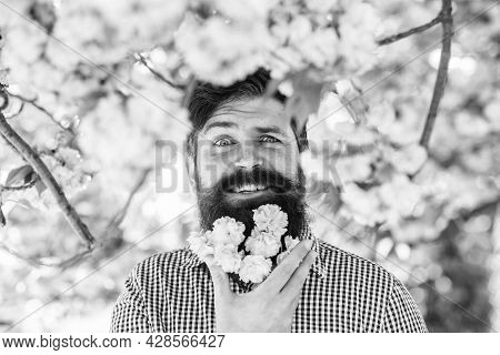 Hairstyle And Beard Fashion. Beautiful Cherry Blossom Sakura In Garden. Spring Mood And Lifestyle. F