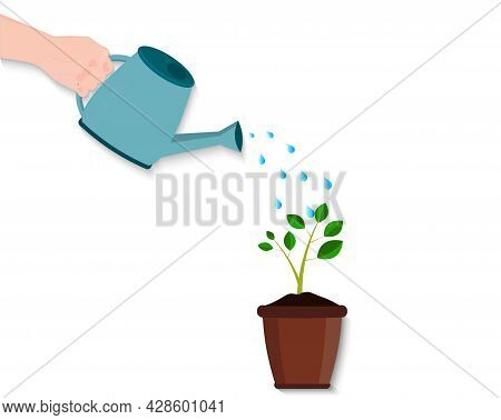 A Hand Is Watering A Houseplant In A Pot From A Watering Can. Growing Tree Or Flower Care. Water In