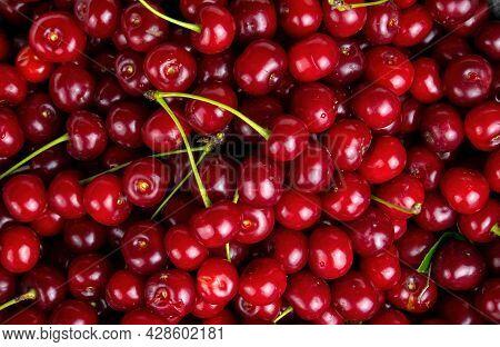 Garden Harvest Of Red Cherry Fruit Berries. Red Cherry. Fruit Berries. Agricultural Business. Farm G